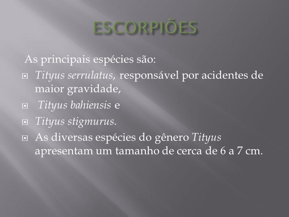 ESCORPIÕES As principais espécies são: