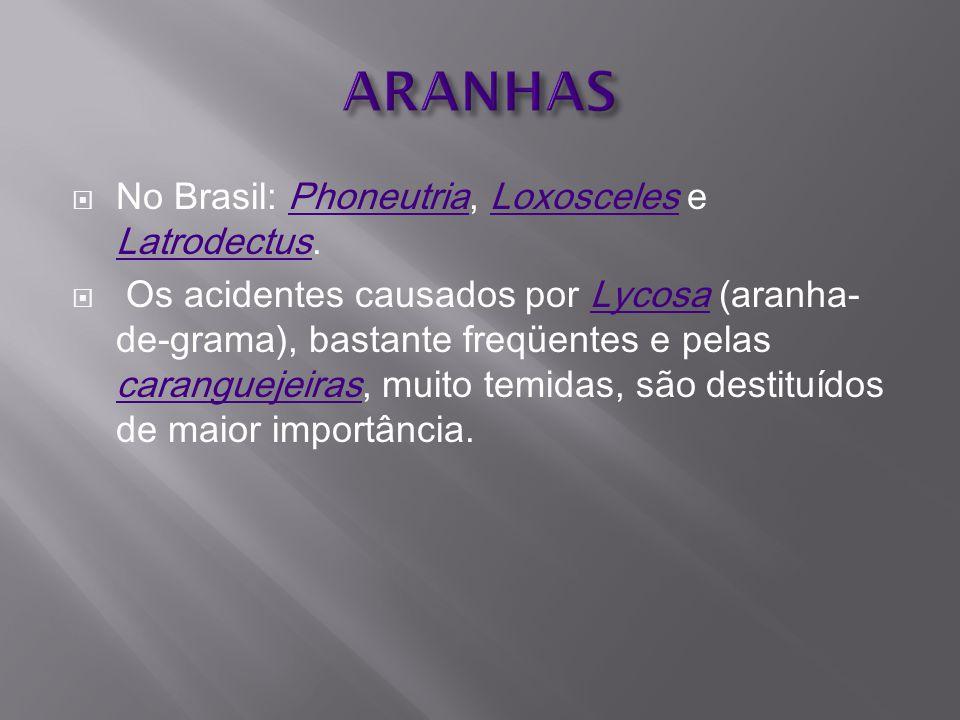 ARANHAS No Brasil: Phoneutria, Loxosceles e Latrodectus.