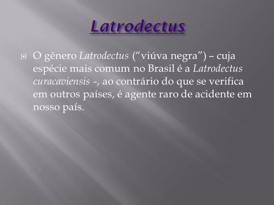 Latrodectus