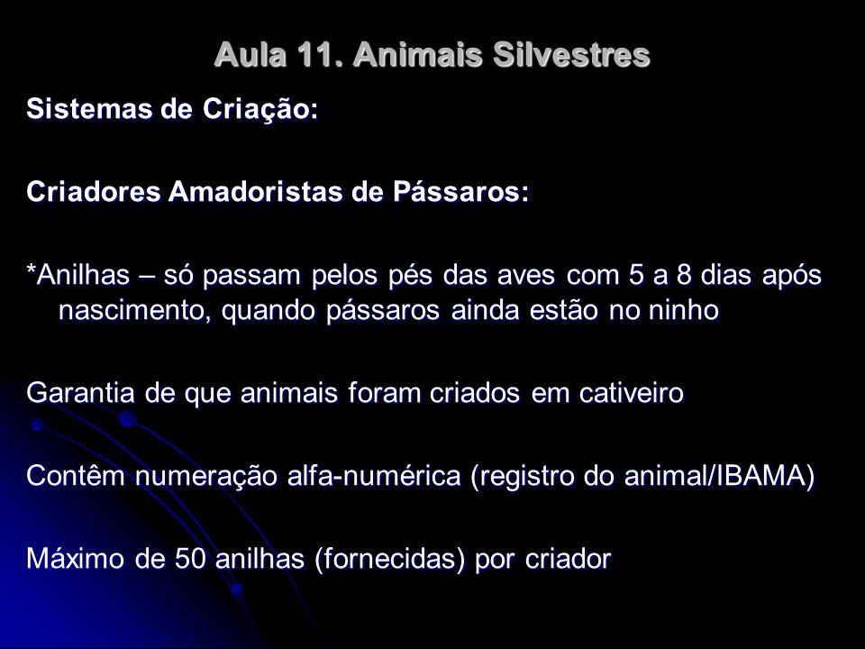 Aula 11. Animais Silvestres