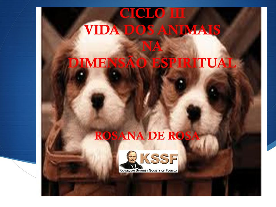 CICLO III VIDA DOS ANIMAIS NA DIMENSÃO ESPIRITUAL