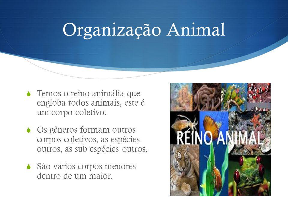 Organização Animal Temos o reino animália que engloba todos animais, este é um corpo coletivo.