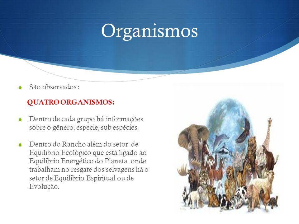 Organismos São observados : QUATRO ORGANISMOS: