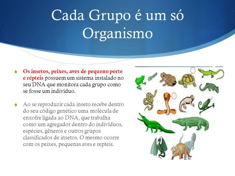 Cada Grupo é um só Organismo