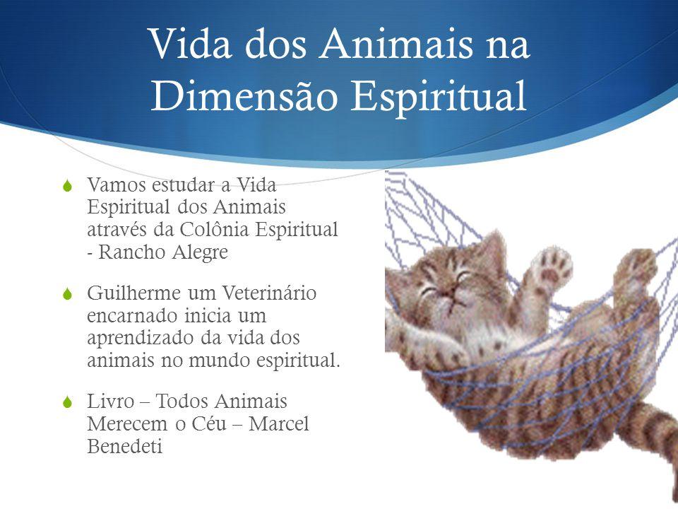 Vida dos Animais na Dimensão Espiritual