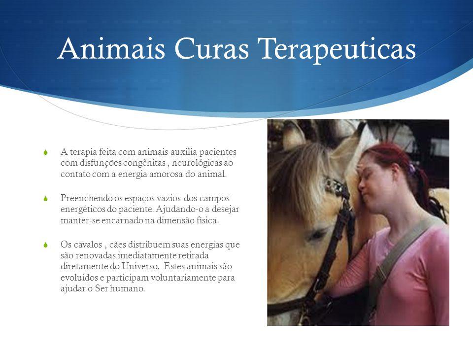 Animais Curas Terapeuticas