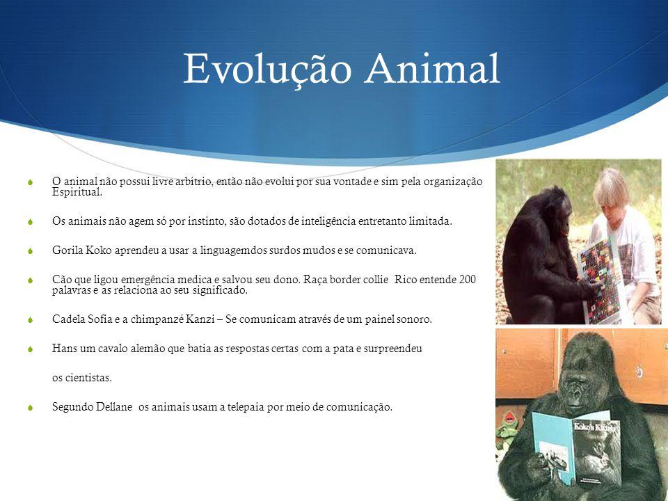 Evolução Animal O animal não possui livre arbítrio, então não evolui por sua vontade e sim pela organização Espiritual.
