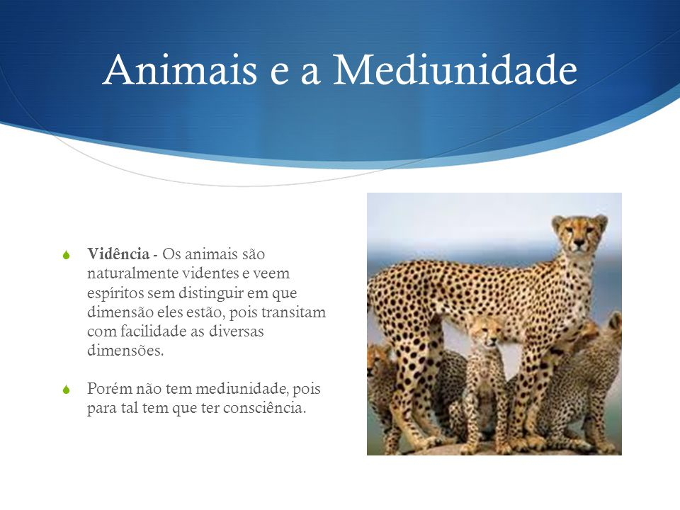Animais e a Mediunidade