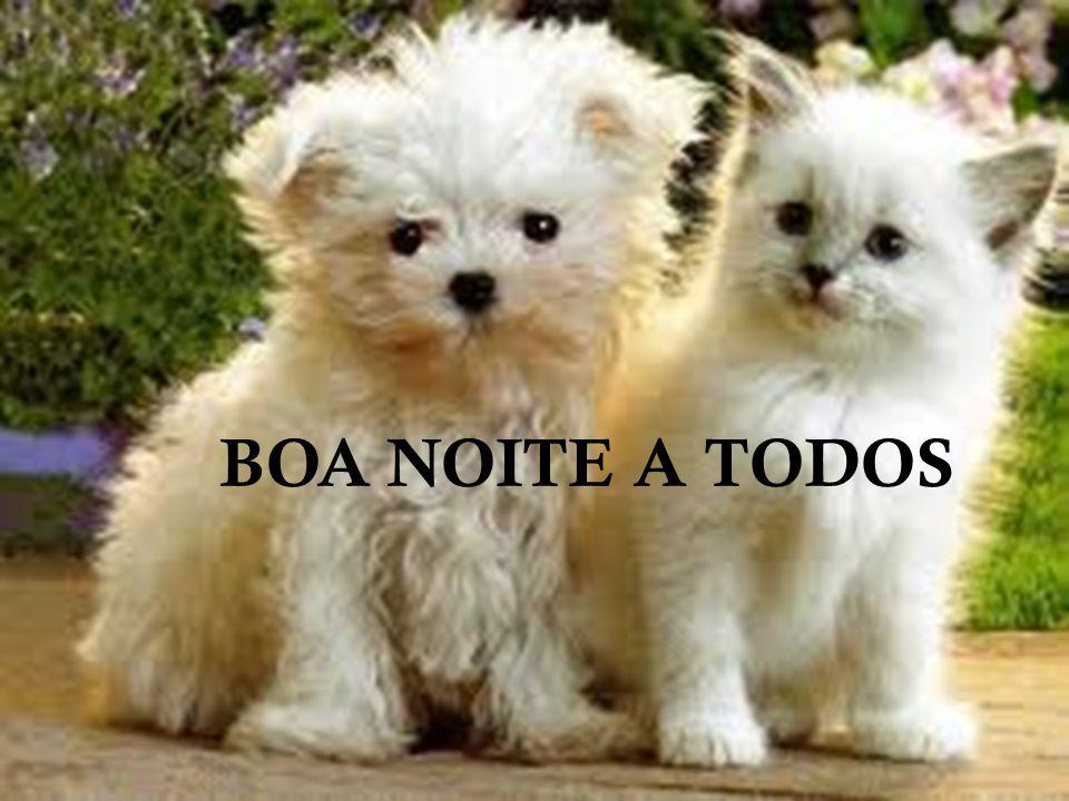 BOA NOITE A TODOS