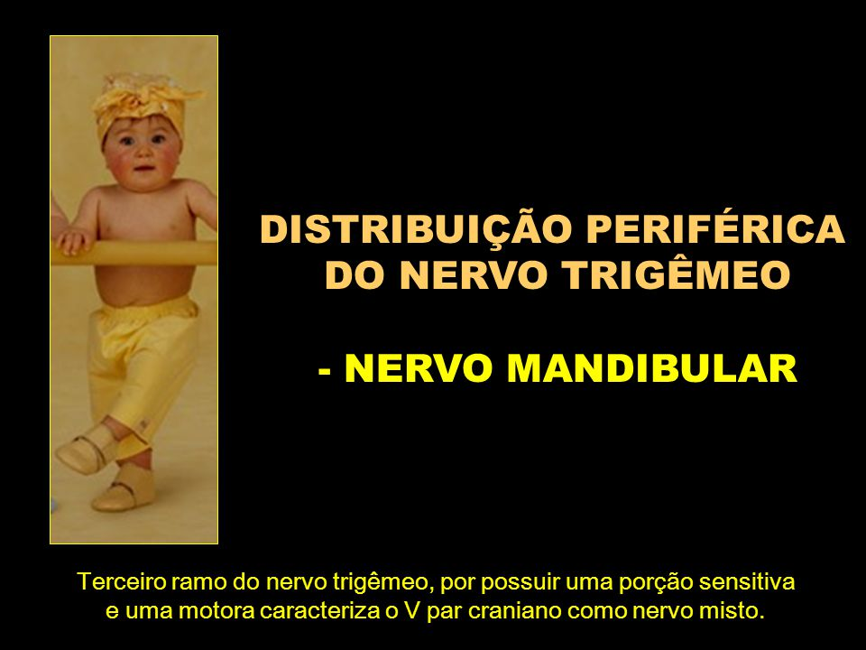 DISTRIBUIÇÃO PERIFÉRICA DO NERVO TRIGÊMEO - NERVO MANDIBULAR