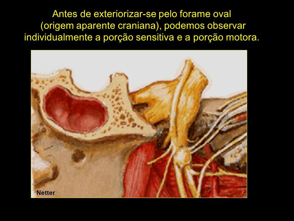 Antes de exteriorizar-se pelo forame oval