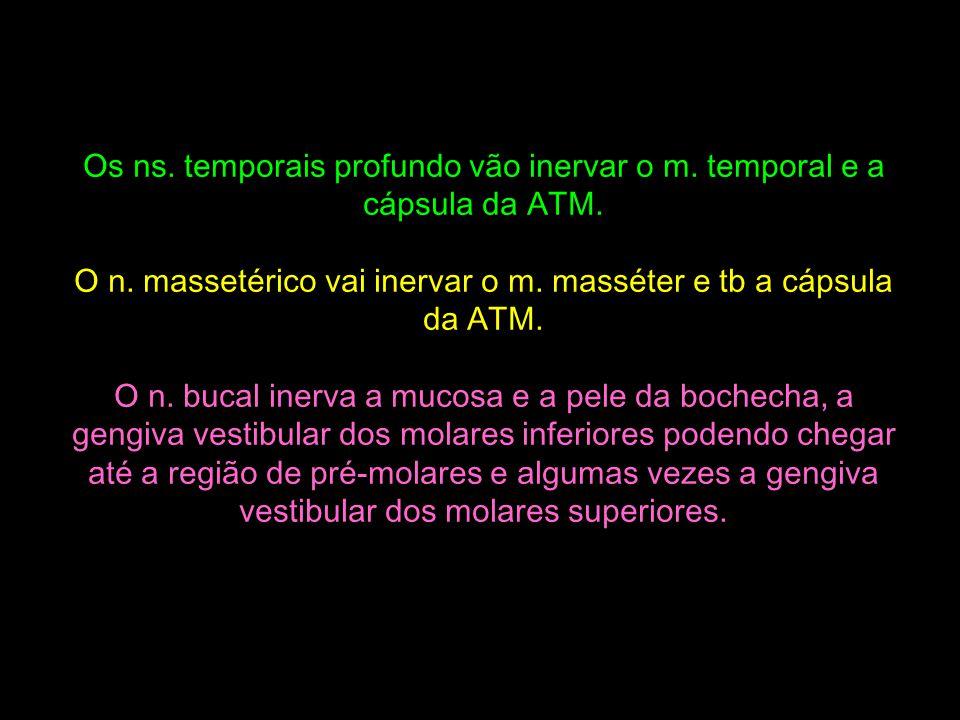 O n. massetérico vai inervar o m. masséter e tb a cápsula da ATM.