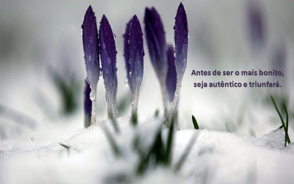 Antes de ser o mais bonito, seja autêntico e triunfará.