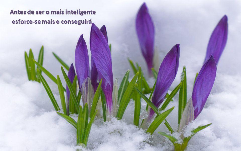 Antes de ser o mais inteligente esforce-se mais e conseguirá.