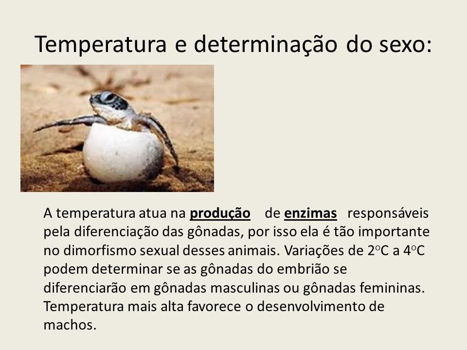 Temperatura e determinação do sexo: