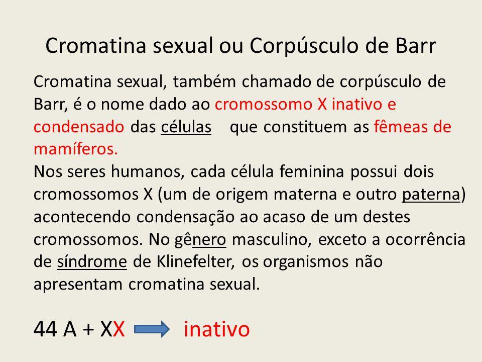 Cromatina sexual ou Corpúsculo de Barr