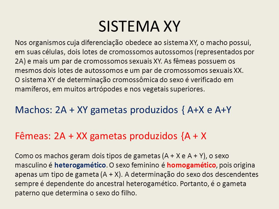 SISTEMA XY Machos: 2A + XY gametas produzidos { A+X e A+Y