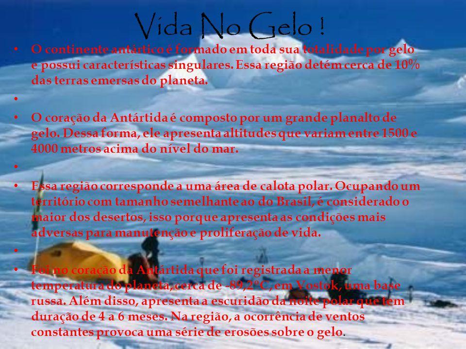 Vida No Gelo !