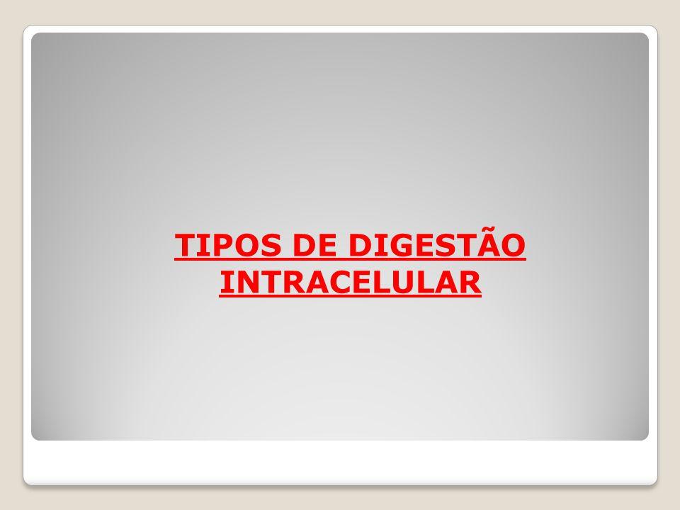 TIPOS DE DIGESTÃO INTRACELULAR