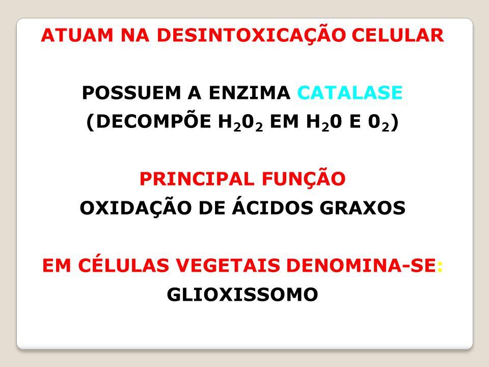 ATUAM NA DESINTOXICAÇÃO CELULAR POSSUEM A ENZIMA CATALASE