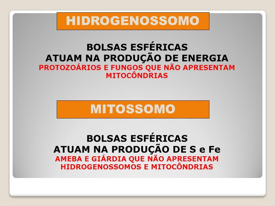 HIDROGENOSSOMO MITOSSOMO
