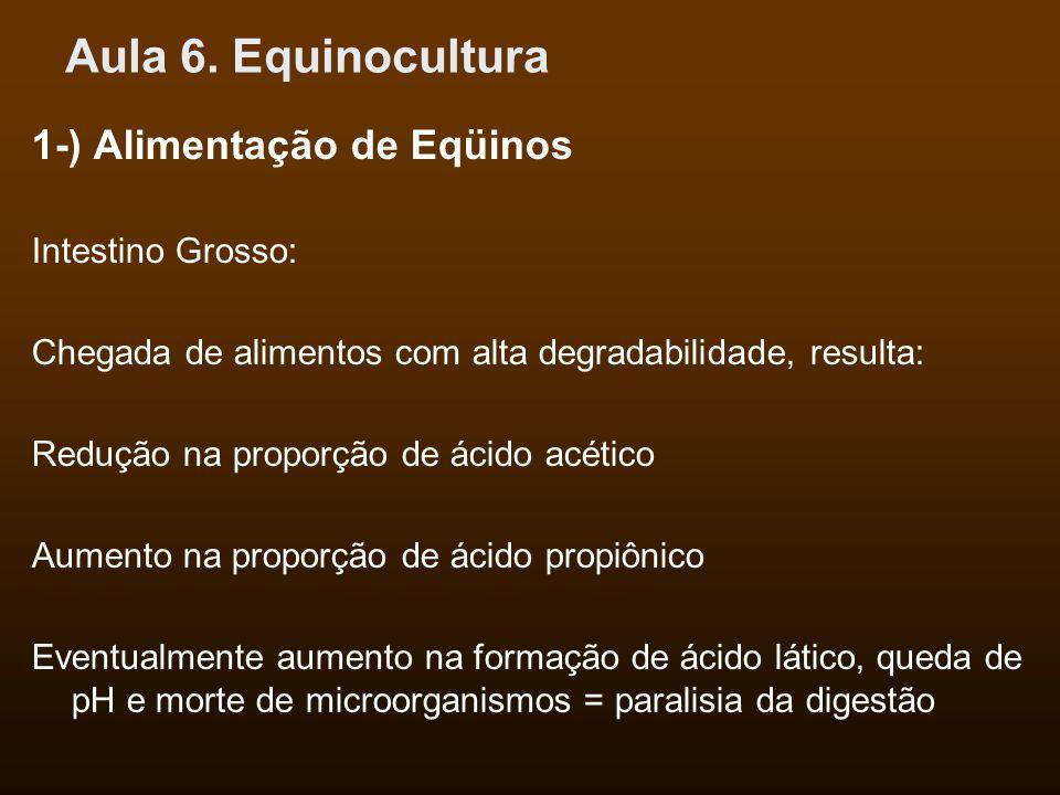 Aula 6. Equinocultura 1-) Alimentação de Eqüinos Intestino Grosso: