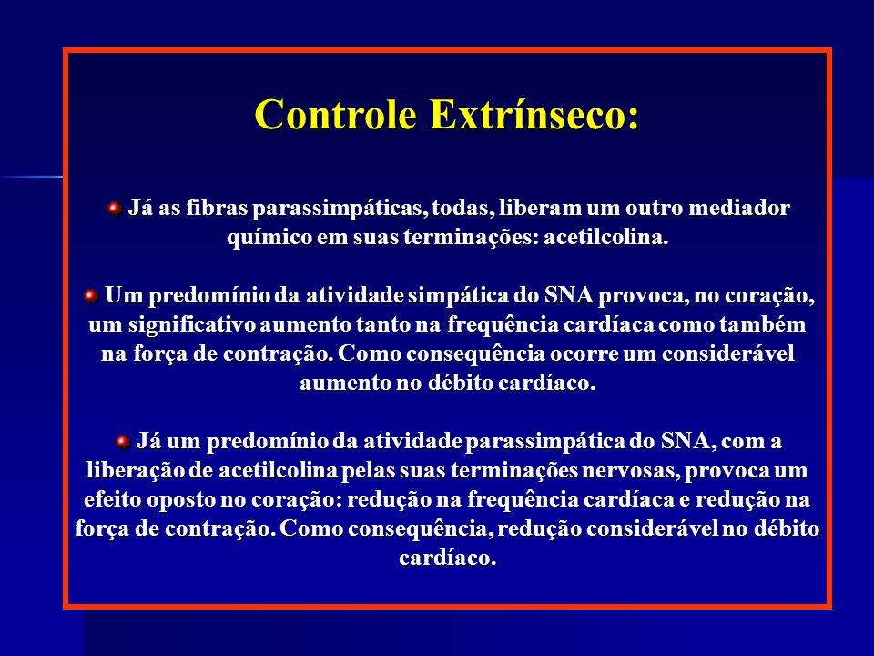 Controle Extrínseco: Já as fibras parassimpáticas, todas, liberam um outro mediador químico em suas terminações: acetilcolina.