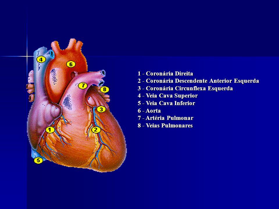 1 - Coronária Direita 2 - Coronária Descendente Anterior Esquerda 3 - Coronária Circunflexa Esquerda 4 - Veia Cava Superior 5 - Veia Cava Inferior 6 - Aorta 7 - Artéria Pulmonar 8 - Veias Pulmonares