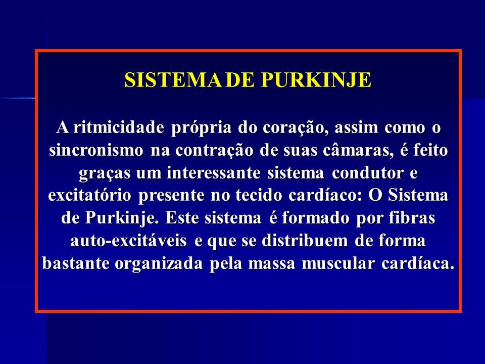 SISTEMA DE PURKINJE