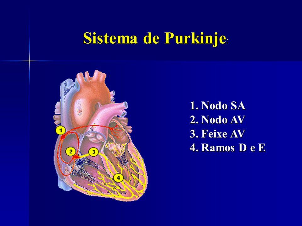Sistema de Purkinje: Nodo SA. Nodo AV.