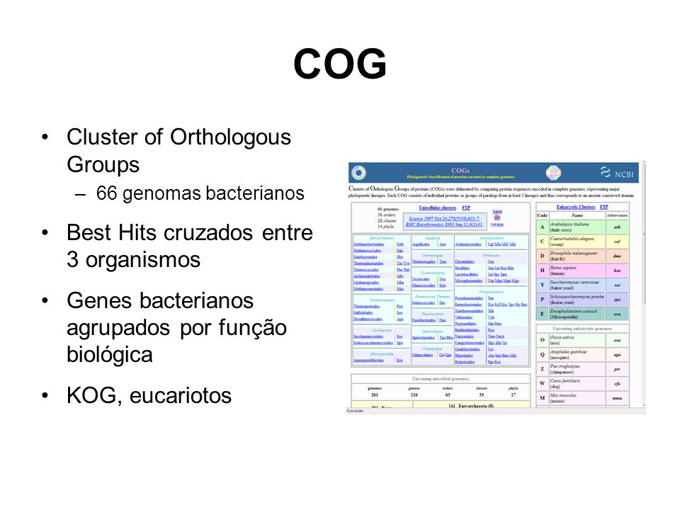 COG Cluster of Orthologous Groups