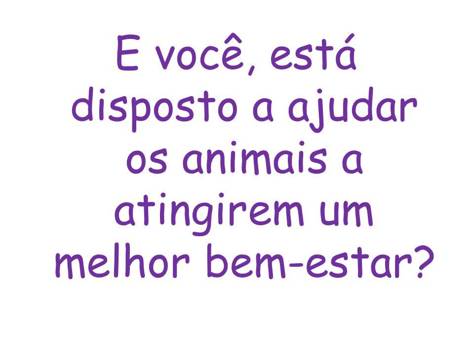 E você, está disposto a ajudar os animais a atingirem um melhor bem-estar