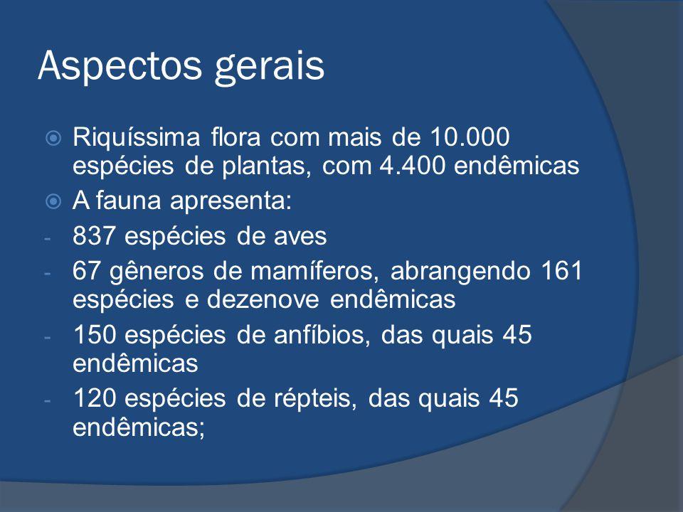 Aspectos gerais Riquíssima flora com mais de 10.000 espécies de plantas, com 4.400 endêmicas. A fauna apresenta: