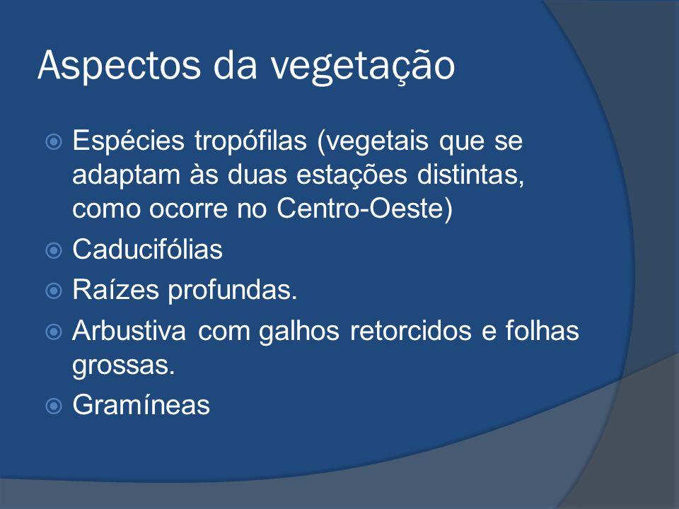 Aspectos da vegetação Espécies tropófilas (vegetais que se adaptam às duas estações distintas, como ocorre no Centro-Oeste)
