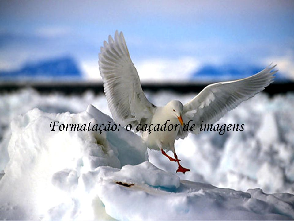 Formatação: o caçador de imagens