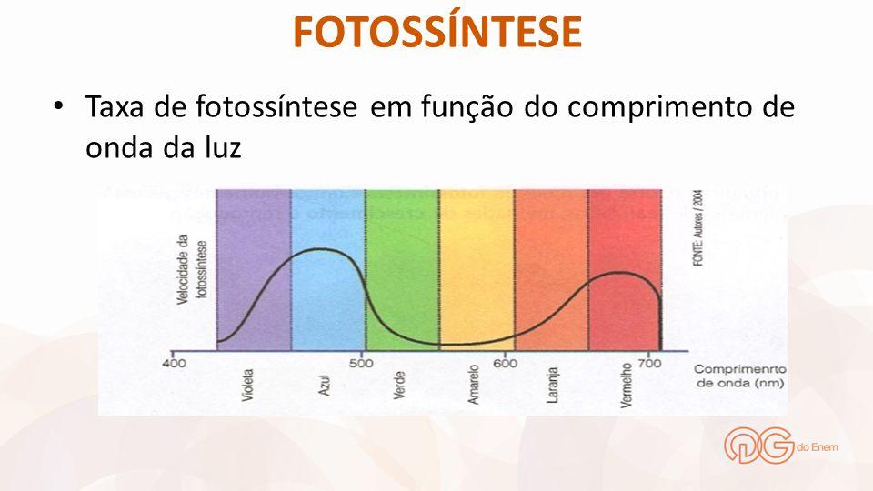FOTOSSÍNTESE Taxa de fotossíntese em função do comprimento de onda da luz