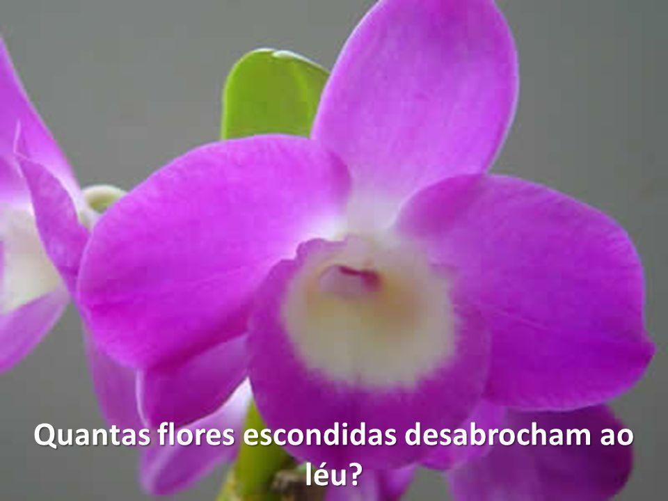 Quantas flores escondidas desabrocham ao léu