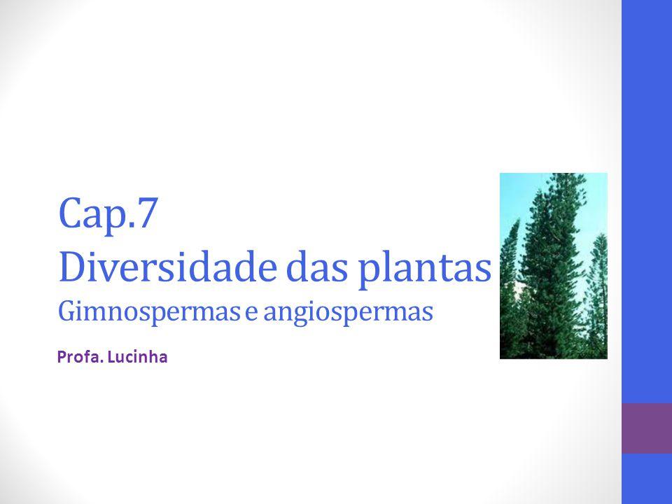 Cap.7 Diversidade das plantas Gimnospermas e angiospermas