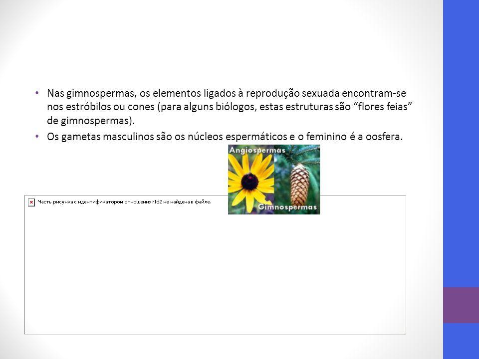 Nas gimnospermas, os elementos ligados à reprodução sexuada encontram-se nos estróbilos ou cones (para alguns biólogos, estas estruturas são flores feias de gimnospermas).