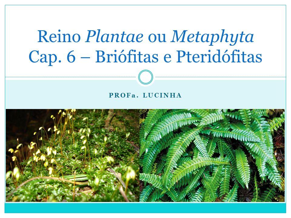 Reino Plantae ou Metaphyta Cap. 6 – Briófitas e Pteridófitas