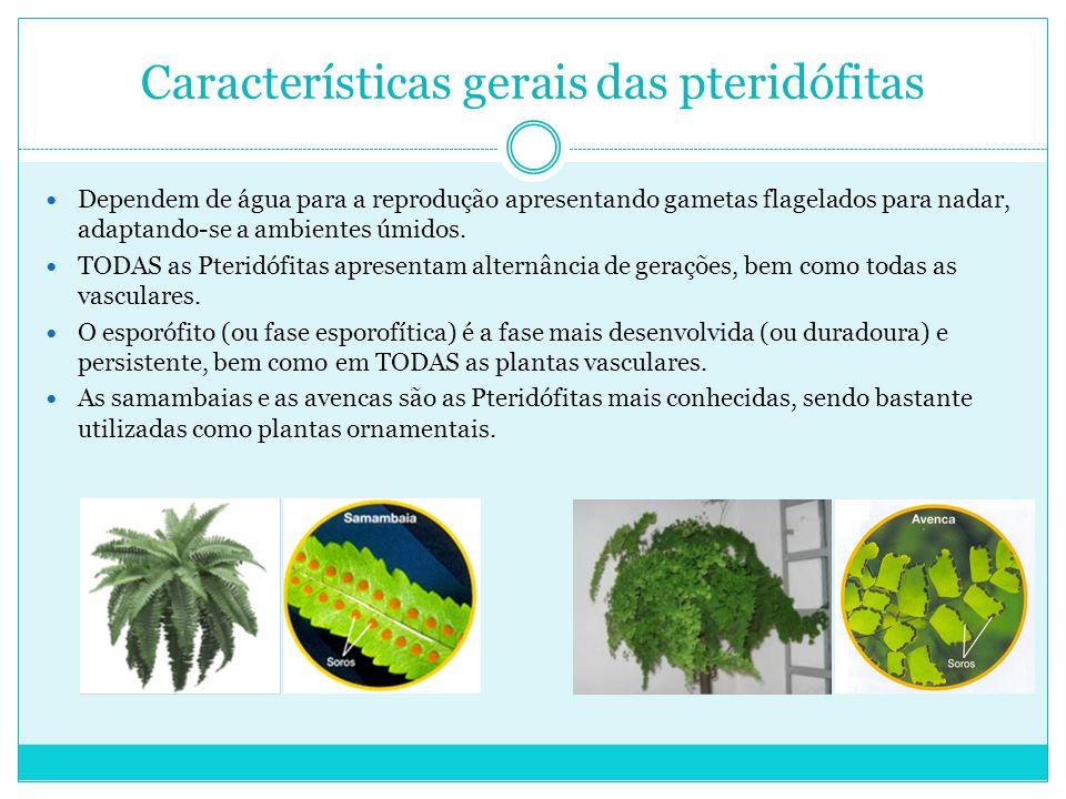 Características gerais das pteridófitas