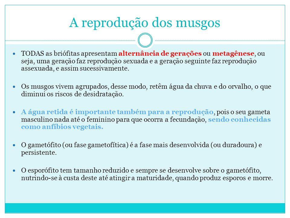 A reprodução dos musgos