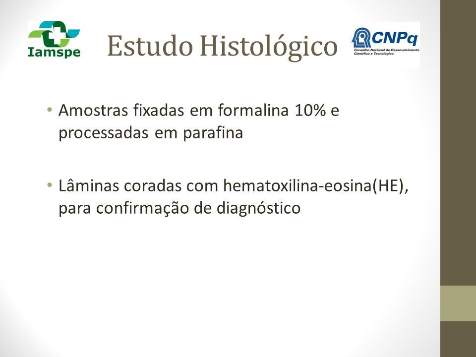 Estudo Histológico Amostras fixadas em formalina 10% e processadas em parafina.