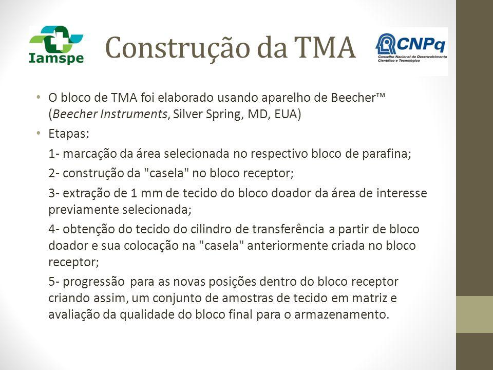 Construção da TMA O bloco de TMA foi elaborado usando aparelho de Beecher™ (Beecher Instruments, Silver Spring, MD, EUA)