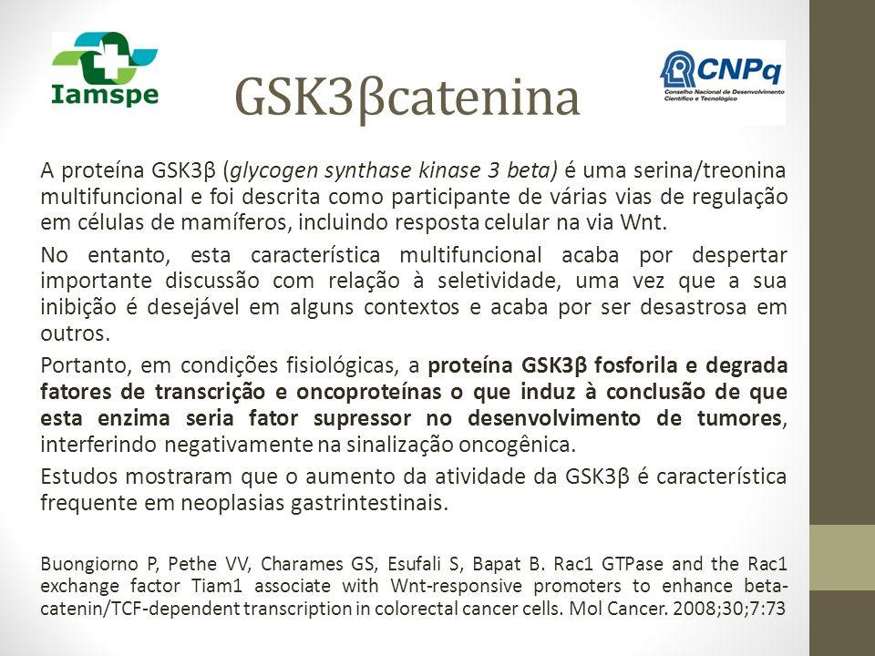 GSK3βcatenina