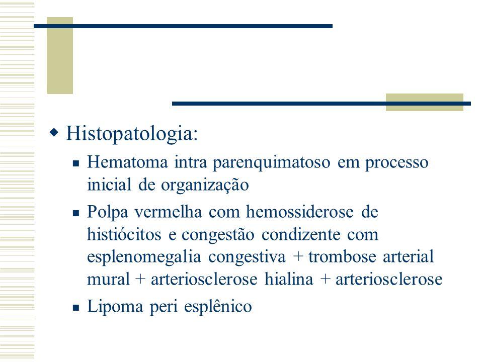 Histopatologia: Hematoma intra parenquimatoso em processo inicial de organização.