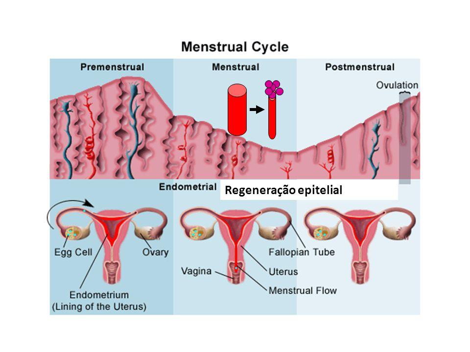 Regeneração epitelial