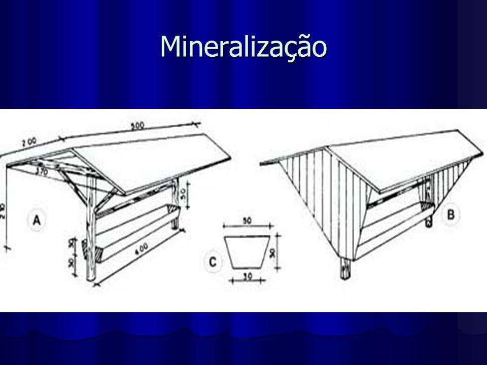 Mineralização