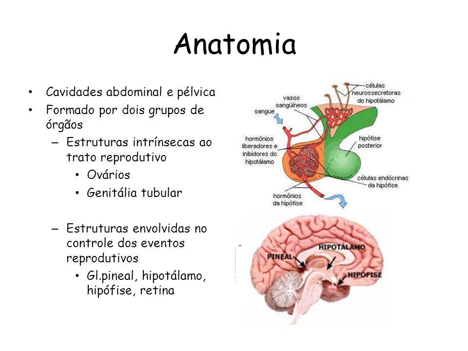 Anatomia Cavidades abdominal e pélvica