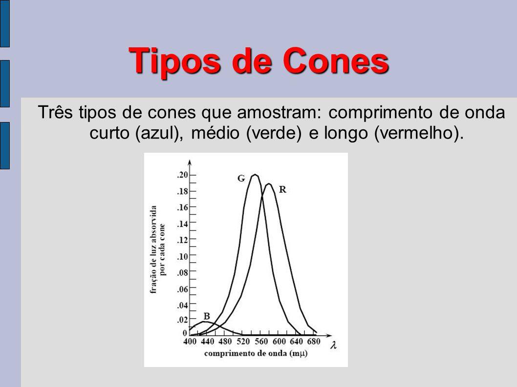 Tipos de Cones Três tipos de cones que amostram: comprimento de onda curto (azul), médio (verde) e longo (vermelho).
